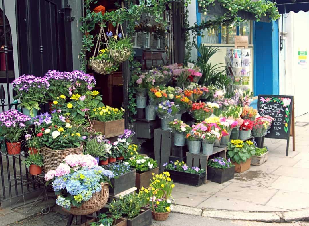 primrose hill londyn kwiaty